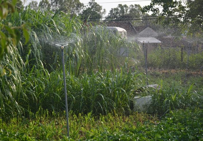 Ảnh 11: Hệ thống giàn phun tiết kiệm nước