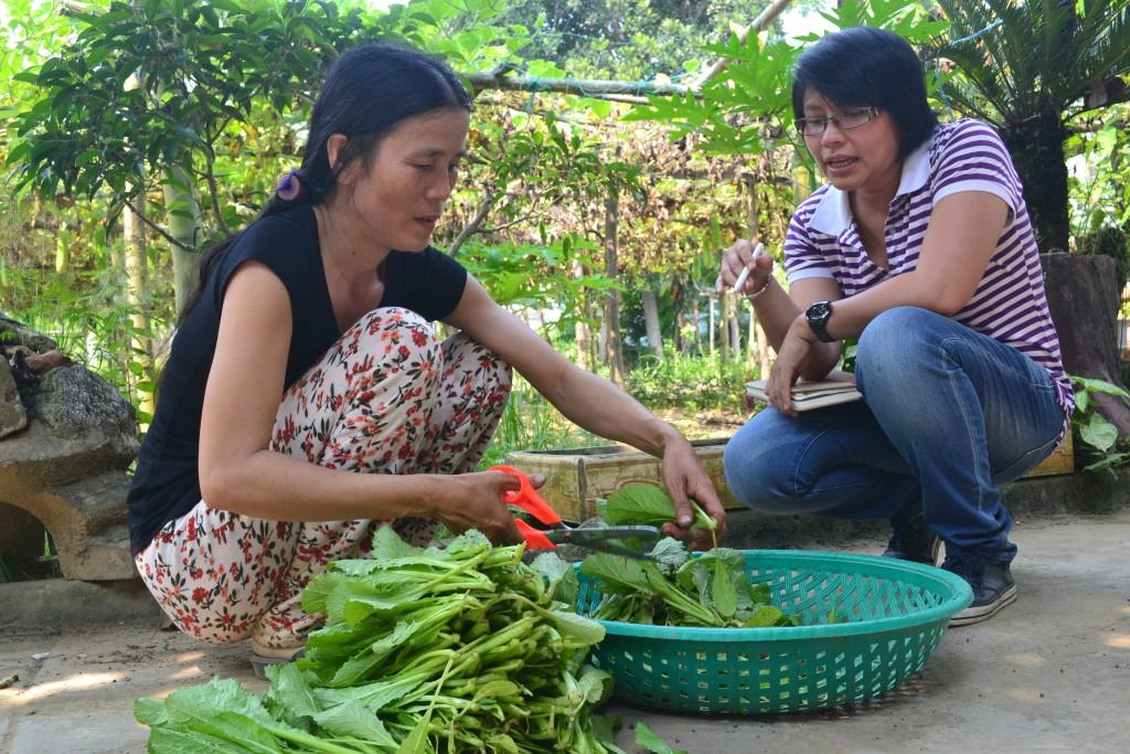 Ảnh 3: Thu hoạch rau của mô hình